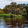 Louisiana Lake II by Diana Powell