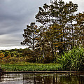Louisiana Landscape by Diana Powell