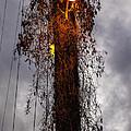 Louisiana Light Post by Diana Powell