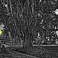 Louisiana Moon Rising Monochrome 2 by Steve Harrington