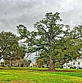 Louisiana Winter 2 by Steve Harrington