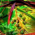 Loulu Palm by Michael Pickett