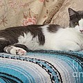 Lounging Cat by Michelle Powell