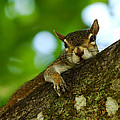 Lounging Squirrel by Dan Dennison