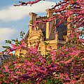 Louvre Blossoms by Brian Jannsen