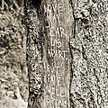 Love And Fate by Scott Pellegrin