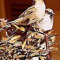 Love Birds II by Bobbee Rickard