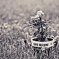 Love Blooms by Sara Frank