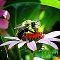 Love Bug by Nava Thompson