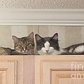 Love Cats by Michelle Powell