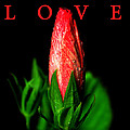 Love by David Lee Thompson