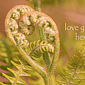 Love Grows Here by Peggy Collins