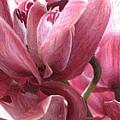 Love In Bloom by Maureen J Haldeman