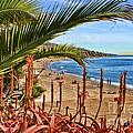 Love In Laguna Beach By Diana Sainz by Diana Raquel Sainz
