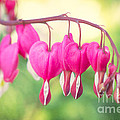 Love In Springtime by Angela Doelling AD DESIGN Photo and PhotoArt