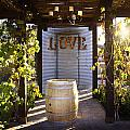 Love In The Vines by Amy Medina