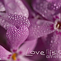 Love Is ... by Colette Panaioti