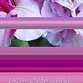 Love Thy Neighbor - Petunias And Verse by Brooks Garten Hauschild