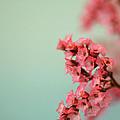 Love Is In The Air by AR Annahita