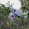 Love Is In The Air by Peggy King