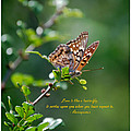 Love Is Like A Butterfly by Leticia Latocki