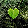 Love Nature  by Sarah Pemberton