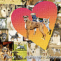 Love Of Boxers by Judy Wood