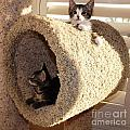 Love Our Cat Condo by Jussta Jussta