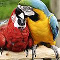 Love Parrotts by Safe Haven Photography Northwest