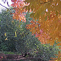 Lovely Autumn Colors by Mike and Sharon Mathews