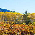 Lovely Fall Colors by Brian Williamson
