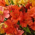 Lovely Flowers by Donna Wilson