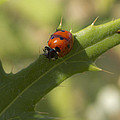 Lovely Lady Bug by Shelly Gunderson