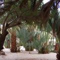 Lovely Oase Desert Camp Sinai Egypt by Colette V Hera  Guggenheim