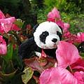 Lovely Pink Flower by Ausra Huntington nee Paulauskaite