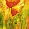 Lovely Poppies by Veikko Suikkanen