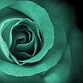 Love's Eternal Teal Green Rose by Jennie Marie Schell