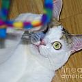 Loving The Rainbow Psychedelic Toy.. by Nina Stavlund