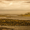 Low Tide Cape Porpoise Maine by Bob Orsillo