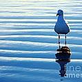 Low Tide Mirror by Everette McMahan jr