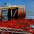 Low Tide - Red Seaweed - Fishing - Moratorium by Barbara Griffin