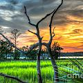 Lowcountry Charm by Dale Powell