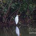 Lowcountry Pond Life by Dale Powell