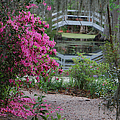 Lowcountry Series II - Ode To Monet by Suzanne Gaff