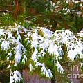 Lowcountry Snow by Dale Powell