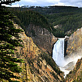 Lower Falls On The Yellowstone River by Ed  Riche