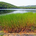 Lower Hadlock Pond by Elizabeth Dow