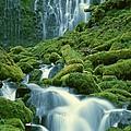 Lower Proxy Falls by Terry Dorvinen