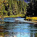 Lower Truckee River by Lynn Bawden