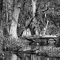 Loxahatchee Black And White by Bruce Bain